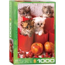 Eurographics - Kittens in Pot - 4674