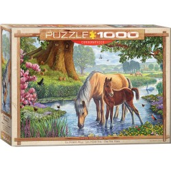 Eurographics - The Fell Ponies - 0976