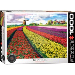 Eurographics - Tulip Fields Netherlands